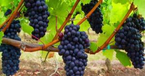«Разжижает кровь и снижает холестерин». Вот что рассказали врачи о пользе красного вина